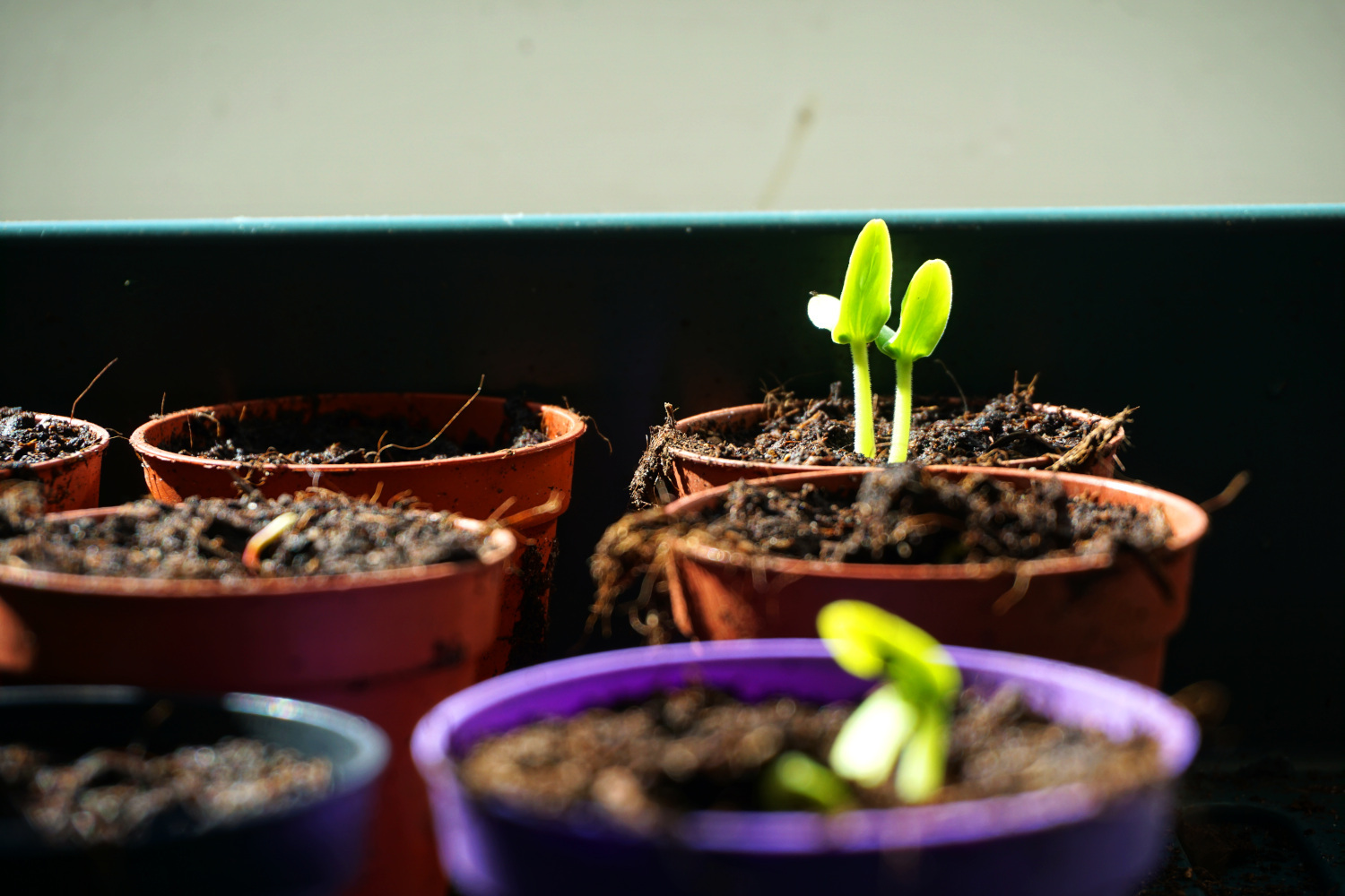 Featured image of post Greetings from our seedlings