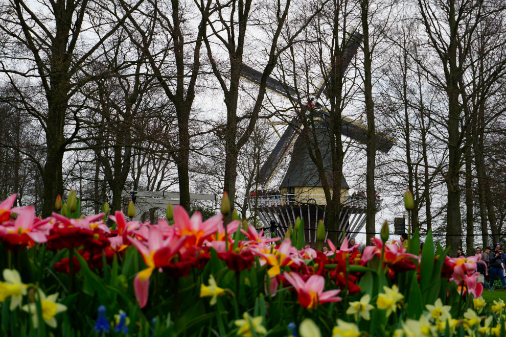 Featured image of post Keukenhof